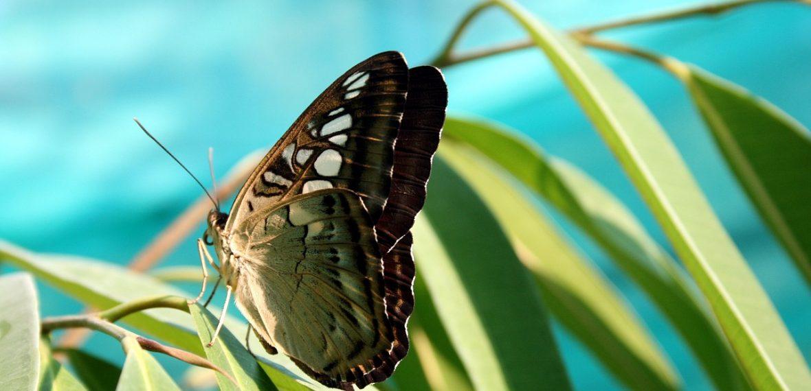 butterfly-730430_1280
