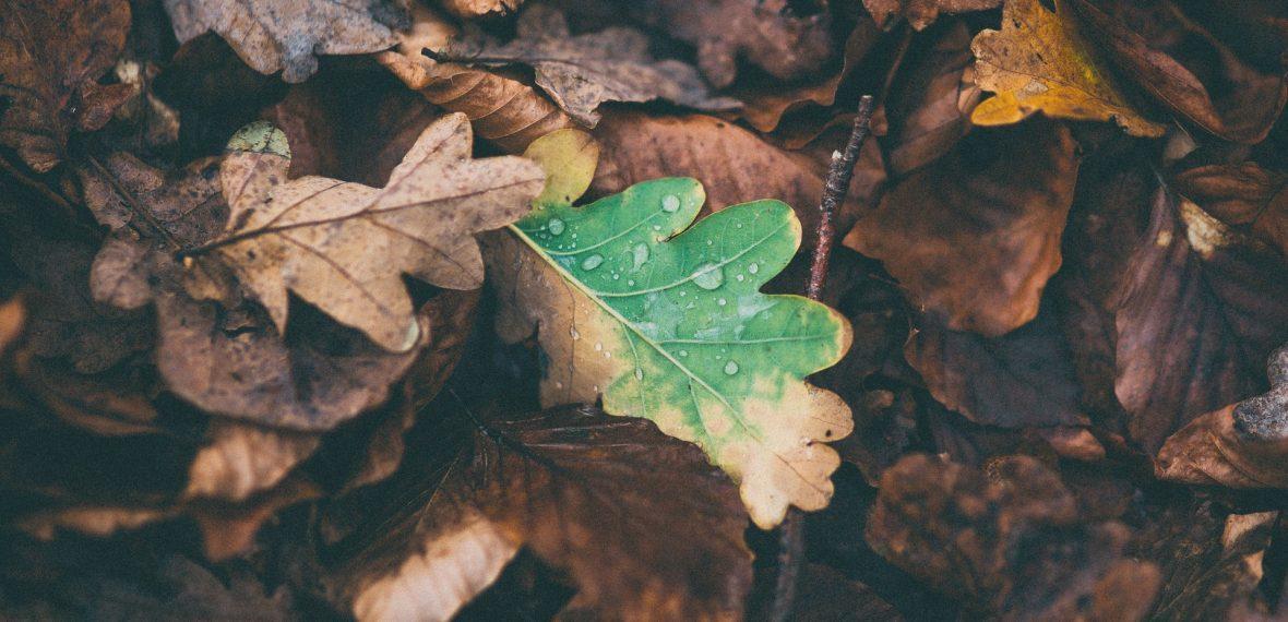 leaves-1149004_1920