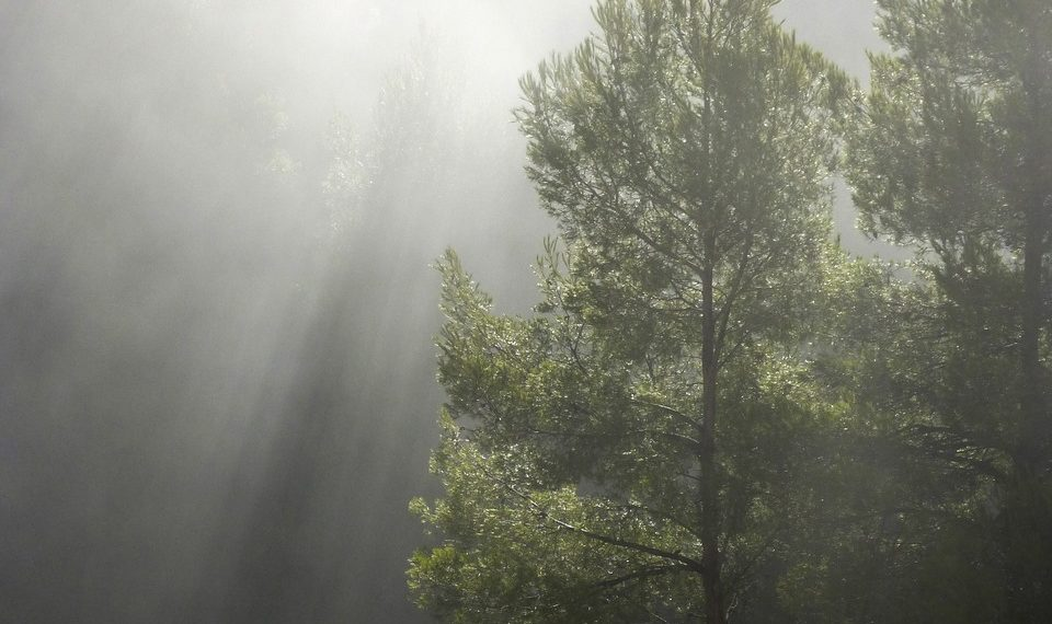 forest-1109180_1280